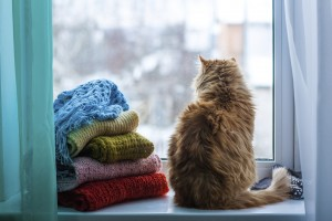 Why Replacement Windows Help Lower Your Energy Bill